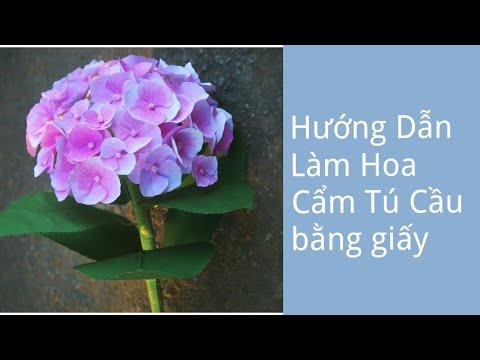 Hướng dẫn làm hoa cẩm tú cầu bằng giấy mỹ thuật   Foci