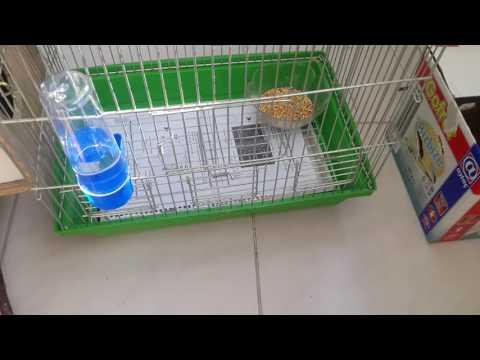 çift Muhabbet Kuşu Kafesi Nasıl Olmalı