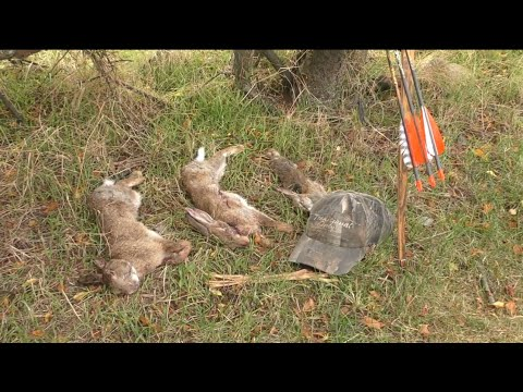 Stickbow Rabbits - Traditional Bowhunting For Rabbits - Small Game Hunting - Tales From The Willows