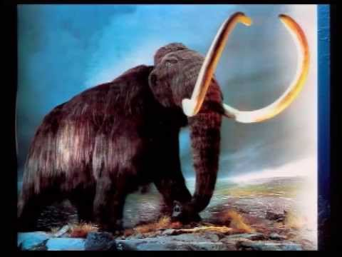 Whatever Happened to the Woolly Mammoths?