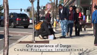 Dargo Profile Youtube
