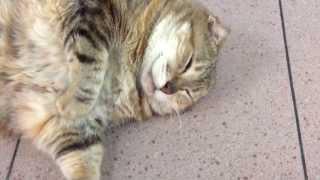 Don't Wake Fat Cats! thumbnail