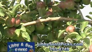 Pick your own Blueberries and Apples at Libby & Son U-Picks in Limerick,Maine