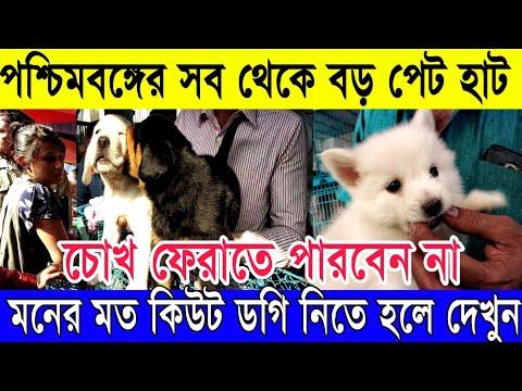 ❤️কিউট কুকুর নিতে চাইলে দেখুন | সব থেকে বড় পেট হাট কলকাতা LIVE (Largest Pet Haat in Kolkata)