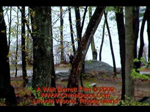Pileated Woodpecker In Lincoln Woods State Park, Rhode Island By Walt Barrett
