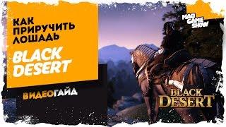 Black Desert Online. Разведение лошадей. Приручение лошади.