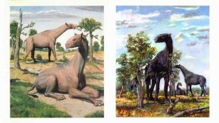 Птерозавры, динозавры и другие древние животные (палеонтологическая подборка)