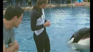 Orca a baleia assassina puxa treinadora ...