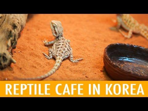 Reptile Cafe in Korea (KWOW #175)