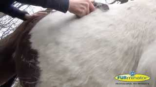 deShedding Pflegewerkzeug für Pferde ** deShedding tool for Horses