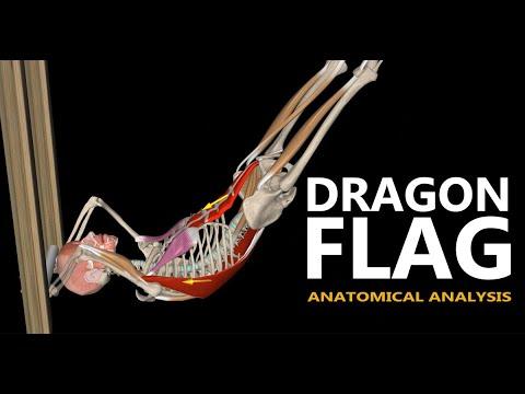The Dragon Flag | Anatomical analysis
