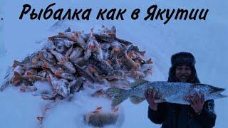 Первый лёд 2020 2021 Рыбалка как в Якутии Трофейная щука Клюёт как из пулемета Заповедник