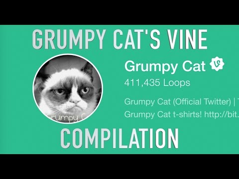 Grumpy Cat's Vine Compilation!