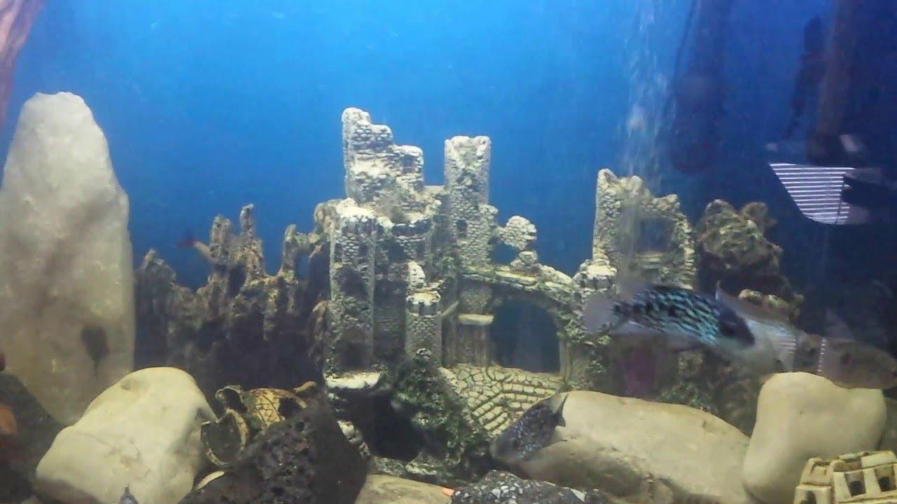 520l cabinet aquarium fish tank tropical - 5ft Fish Tank