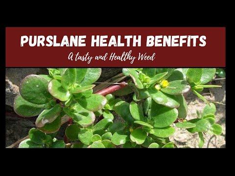 Purslane Health Benefits  A Healthy Tasty Weed