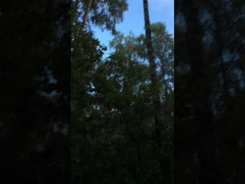 Танец листиков:;))))Короткие видео о природе.Лосиный остров.