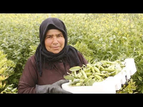 Syrian refugees embrace work permits, but some worries remain