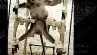 animaux maltraités pour le plaisir des êtres humains .....LA HONTE !!!!!!