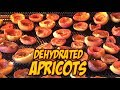 DIY How To Make Dried Apricots / Dehydrated Apricots In Breville Smart Oven Air