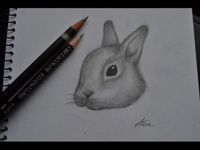 Näin piirrän kanin