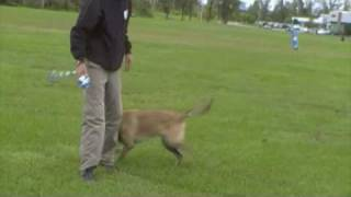 Dog Training - Do It Yourself Dog Toy