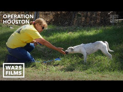 Hope For Paws Rescue Starving Scared Puppy From Destroyed Texas Neighborhood: Operation Houston