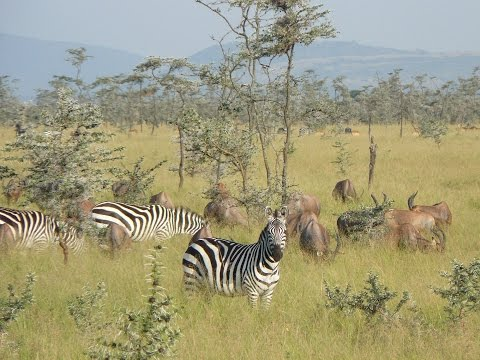 (Doku) Tansania - Vom Kilimandscharo in die Serengeti (HD)