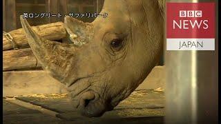 キタシロサイを救え 最も極端な動物保全の形