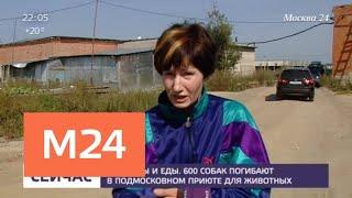 В подмосковном приюте без воды и еды содержатся 600 собак - Москва 24