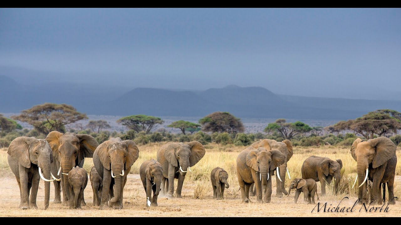 an analysis of african wildlife in africa Tackling poaching & illegal wildlife trafficking in africa ne of the greatest threats to africa's wildlife comes from the african wildlife foundation.