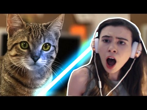 Thumbnail: REACTING TO JEDI KITTENS!!!