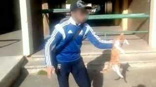 L'homme qui a maltraité un chat sur une vidéo sera jugé