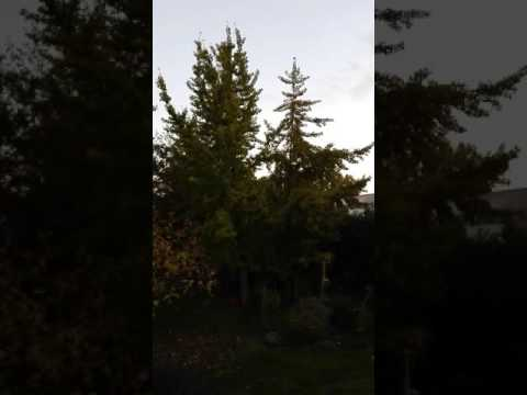 Rumori inquinamento acustico Ferrara