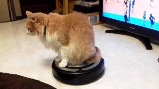 【猫、ルンバ上で固まる】微動だにせずルンバの思うがままに揺られる猫ちゃん