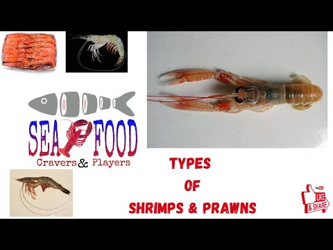 Top Shrimps Of World |Seafood Cravers & Players|Simple Guide On Shrimps & Prawns|Arun Alex Elengical
