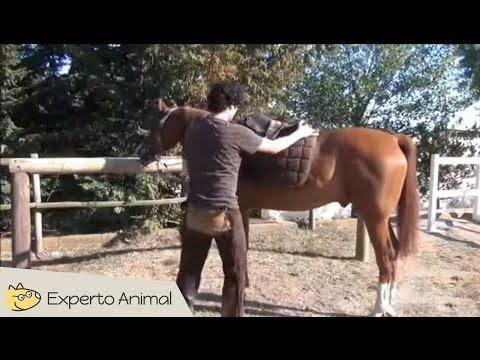 ensillar-el-caballo-fuera-del-box