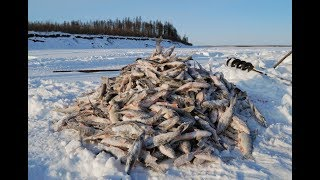 Зимняя рыбалка  на сети в Сибири в жуткий мороз!!!!