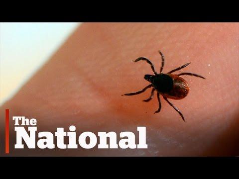 The summer of tick-mageddon
