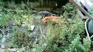 Cat eats grass!!!!!