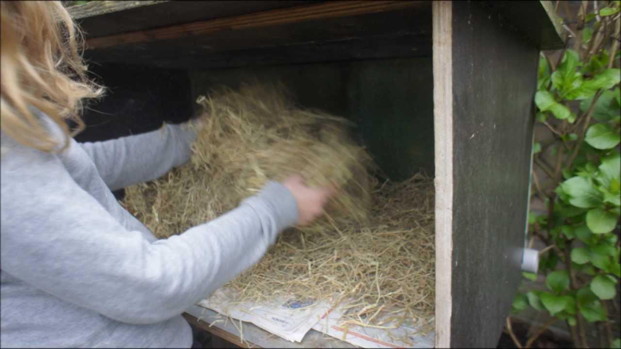 Hoe verzorg je een konijn youtube - Hoe sluit je een pergola ...