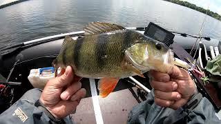 Здоровые ОКУНИ просто ГНУТ СПИННИНГ В ДУГУ УДАЧНАЯ рыбалка на спиннинг Ловля щуки