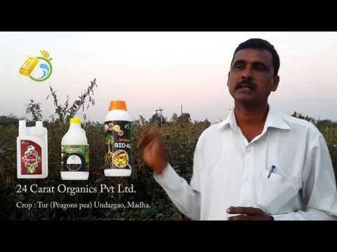 24 Carat Organics Pvt Ltd,  Pune