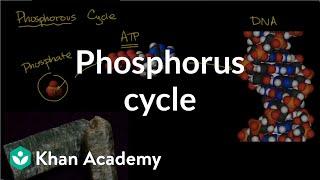 Phosphorous Cycle Ecology Khan Academy