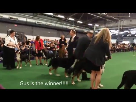 Hanging With Gus at Westminster Dog Show 2016