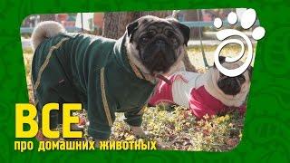 Одежда Для Собак (Часть Первая). Все О Домашних Животных