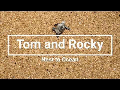 Tom and Rocky - Nest to Ocean
