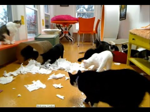 Friends of Felines Ohio, 'Paper Towel Snowstorm',