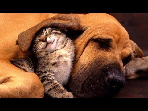 ♥Cute Dogs and Cats Doing Funny Things 2018♥ by TimeSquad!