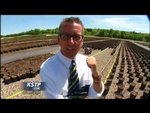 Kstp Abc Bailey Nursery Uses Harvest Automation Robots For Time Consuming Dull Job