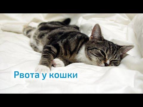 Вопрос: Кровавая рвота у кормящей кошки. Кошка рвёт кровью. Что делать?